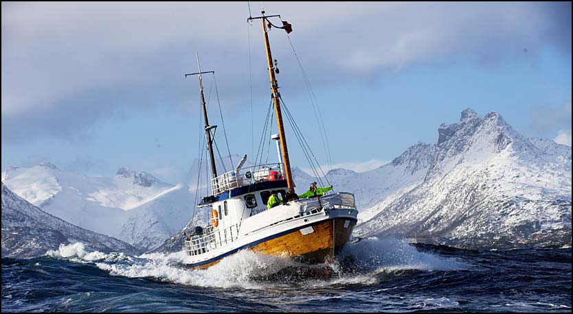 fishing-in-lofoten-norway